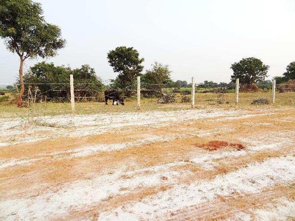 Residential Plot for Sale in Shad Nagar, Hyderabad - 810 Sq. Yards
