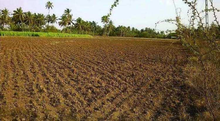Farm Land for Sale in Sasan Gir, Junagadh - 12.5 Bigha