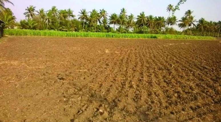 Farm Land for Sale in Sasan Gir, Junagadh - 14 Bigha