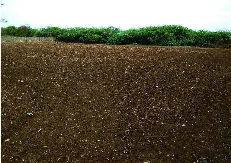 Farm Land for Sale in Sasan Gir, Junagadh - 50 Bigha