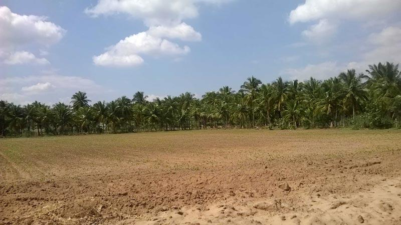 2200 Sq. Feet Residential Land / Plot for Sale in Bilaspur - 2200 Sq.ft.