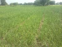 100 Acre Farm Land for Sale in Mangawan, Rewa