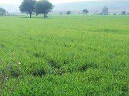 1452 Sq. Yards Industrial Land for Sale in Ganaur, Sonipat