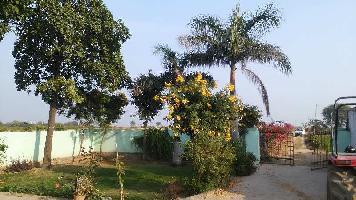 13 Bigha Farm Land for Sale in Nainwa, Bundi