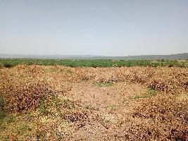 14 Bigha Farm Land for Sale in Nainwa