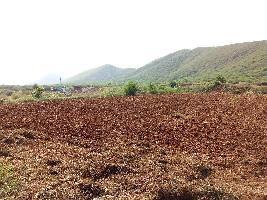 8 Bigha Farm Land for Sale in Lakheri, Bundi