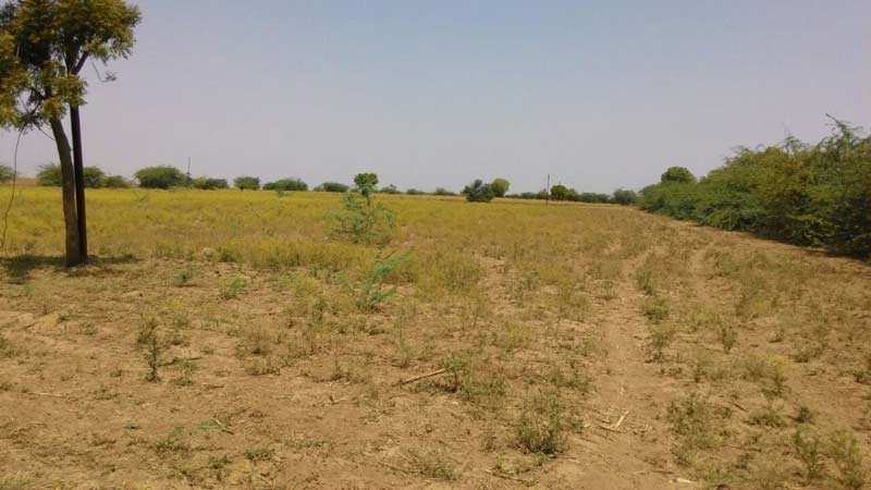 Farm Land for Sale in Aurangabad - 6.5 Acre