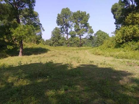 6 Bigha Farm Land for Sale in Morni Hills, Panchkula