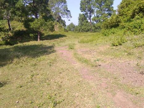 7 Bigha Farm Land for Sale in Morni, Panchkula