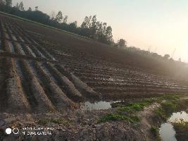18 Acre Farm Land for Sale in Barwala, Panchkula