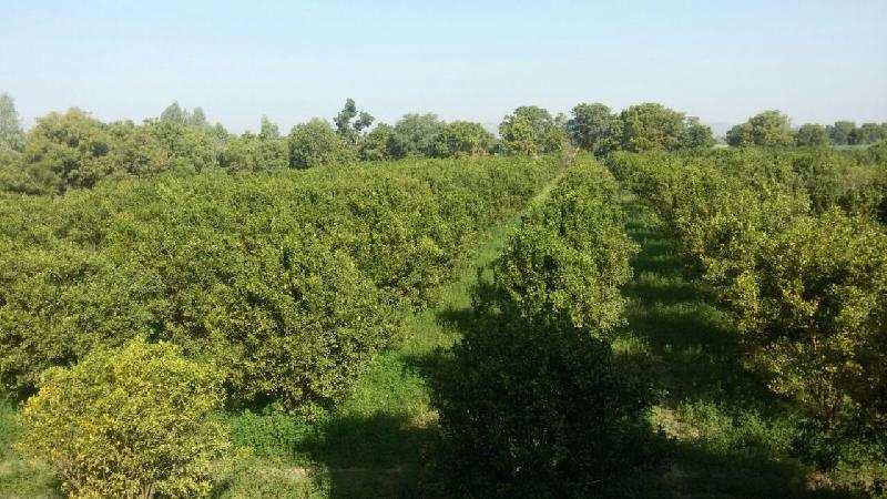 Agricultural/Farm Land for Sale in Mandalgarh, Bhilwara - 21.10 Bigha
